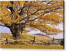 Golden Autumn Acrylic Print by Alan L Graham