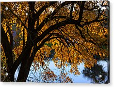 Golden Autumn Leaves Acrylic Print by Garry Gay