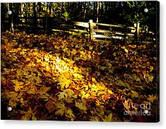 Golden Autumn Leaves Acrylic Print by Graham Foulkes