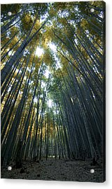 Golden Bamboo Forest Acrylic Print by Aaron S Bedell
