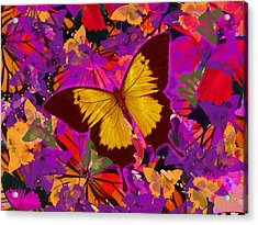 Golden Butterfly Painting Acrylic Print by Alixandra Mullins