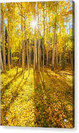 Golden Acrylic Print by Darren  White