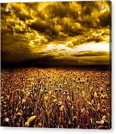Golden Fields Acrylic Print by Jacky Gerritsen