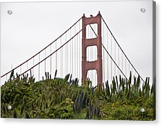 Golden Gate Bridge 1 Acrylic Print by Shane Kelly