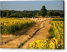 Golden Hour On Country Road Acrylic Print by Davorin Mance