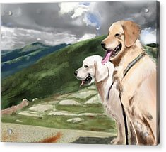 Golden Lab Acrylic Print by Eric Smith