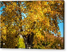 Golden Leaves Of Autumn Acrylic Print by Mike Lee