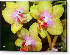 Golden Orchids Acrylic Print by Dora Sofia Caputo Photographic Art and Design