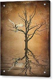Golden Owl Acrylic Print by Sharon Lisa Clarke