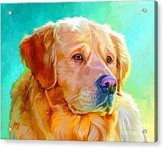 Golden Retriever Art Acrylic Print by Iain McDonald