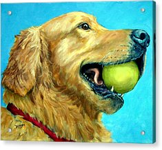 Golden Retriever Profile With Tennis Ball Acrylic Print by Dottie Dracos