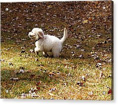 Golden Retriever Puppy Acrylic Print by Andrea Anderegg
