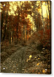 Golden Walk Acrylic Print by Gothicolors Donna