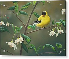 Goldfinch And Snowbells Acrylic Print by Peter Mathios