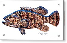 Goliath Grouper Acrylic Print by Carey Chen