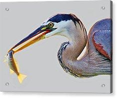 Gone Fishing Acrylic Print by Paulette Thomas