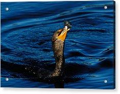 Gone Fishing Acrylic Print by Stefan Carpenter