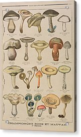 Good And Bad Mushrooms Acrylic Print by French School