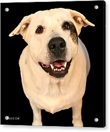 Good Dog Acrylic Print by Bellesouth Studio