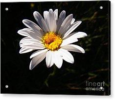 Good Morning Sunshine Acrylic Print by Agnieszka Ledwon