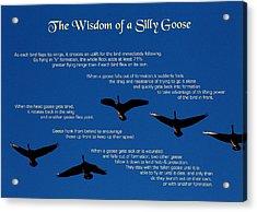 Goose Wisdom Acrylic Print by Mike Flynn