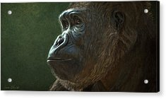 Gorilla Acrylic Print by Aaron Blaise