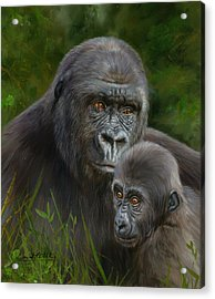 Gorilla And Baby Acrylic Print by David Stribbling