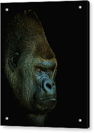 Gorilla Portrait Digital Art Acrylic Print by Ernie Echols