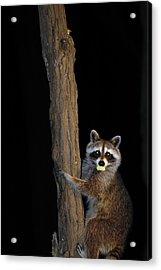Gotcha The Cornbread Bandit Acrylic Print by Randall Branham
