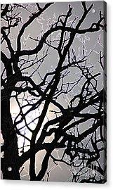 Goth Tree Acrylic Print by First Star Art