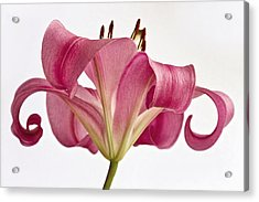 Graceful Lily Acrylic Print by Kim Andelkovic