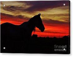 Gracie At Sunset Acrylic Print by Lynda Dawson-Youngclaus