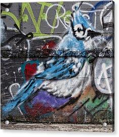 Graffiti Bluejay Acrylic Print by Carol Leigh