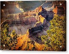 Grand Canyon National Park Acrylic Print by Bob and Nadine Johnston