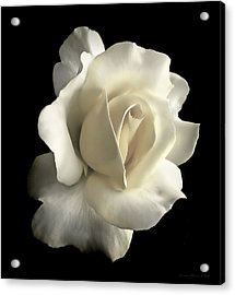Grandeur Ivory Rose Flower Acrylic Print by Jennie Marie Schell