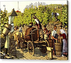 Grape Harvest 1890 Acrylic Print by Padre Art