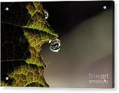 Grape Leaf With Rain Drop Acrylic Print by Cindi Ressler