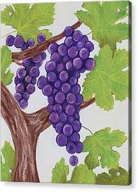 Grape Vine Acrylic Print by Anastasiya Malakhova