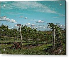 Grape Vines Acrylic Print by Jeff Swanson