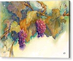 Grapes Acrylic Print by Hilda Vandergriff