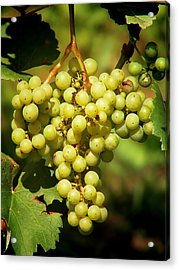 Grapes - Yummy And Healthy Acrylic Print by Christine Till