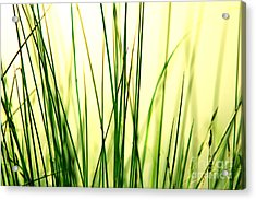 Grass Background Acrylic Print by Michal Bednarek