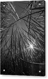 Grass Forest Acrylic Print by Luca Diana