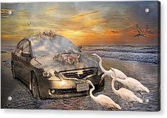 Grateful Friends Curious Egrets Acrylic Print by Betsy C Knapp