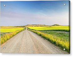 Gravel Road To West Rainy Butte Acrylic Print by Chuck Haney