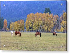 Grazing Horses Winthrop Western Acrylic Print by Tom Norring