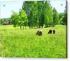 Grazing Sheep Acrylic Print by Susan Savad