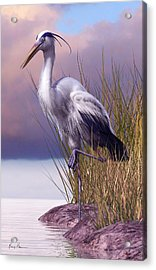 Great Blue Heron Acrylic Print by Gary Hanna