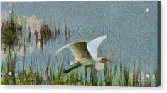 Great Egret Painting Acrylic Print by Dan Sproul