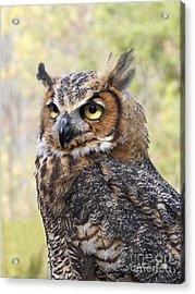Great Horned Owl Acrylic Print by Ann Horn